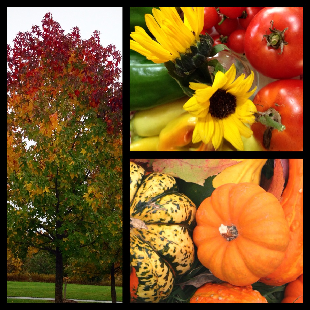 Colors of October