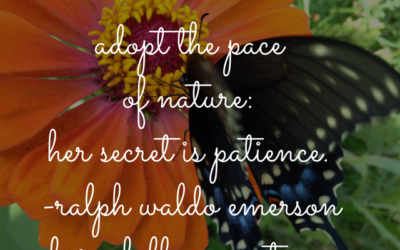 BFP Inspiration Moment on Pace and Patience